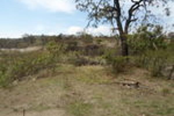 Foto de terreno habitacional en venta en pegado al bosque primavera , bosques de santa anita, tlajomulco de zúñiga, jalisco, 3033926 No. 08