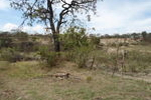 Foto de terreno habitacional en venta en pegado al bosque primavera , bosques de santa anita, tlajomulco de zúñiga, jalisco, 3033926 No. 12