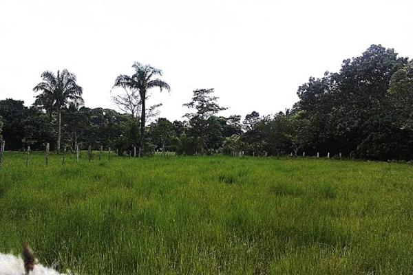 Foto de terreno comercial en venta en  , pejelagartero, huimanguillo, tabasco, 1122585 No. 05