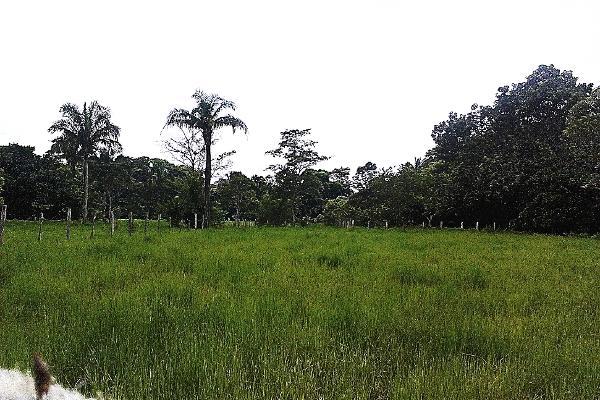 Foto de terreno comercial en venta en  , pejelagartero, huimanguillo, tabasco, 1122585 No. 12