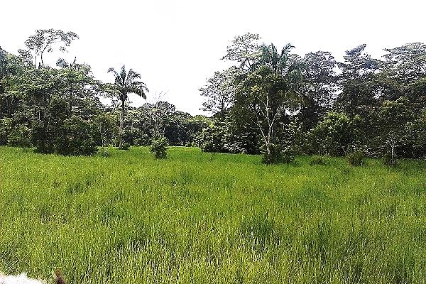 Foto de terreno comercial en venta en  , pejelagartero, huimanguillo, tabasco, 1122585 No. 13