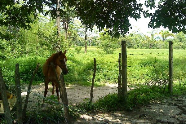 Foto de terreno comercial en venta en  , pejelagartero, huimanguillo, tabasco, 1122585 No. 16