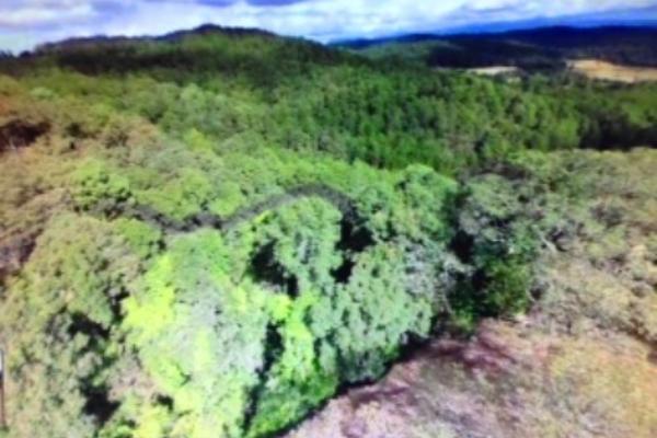 Foto de terreno habitacional en venta en pinar de osorios , valle de bravo, valle de bravo, méxico, 3415232 No. 05