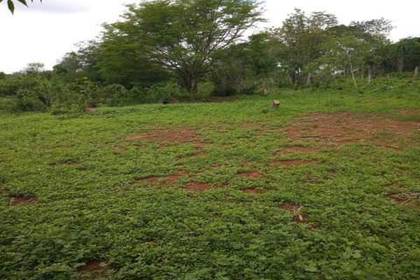 Foto de terreno habitacional en venta en plan de ayala s/n , pucte, othón p. blanco, quintana roo, 18628294 No. 03