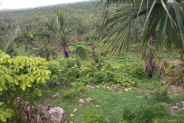 Foto de terreno habitacional en venta en plan de ayala s/n , pucte, othón p. blanco, quintana roo, 18628294 No. 05