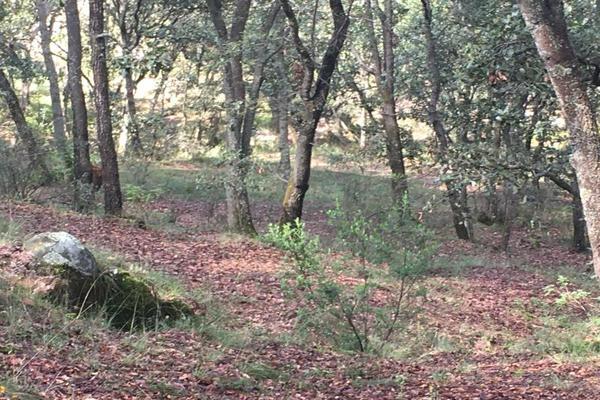 Foto de terreno habitacional en venta en principal sin numero, villa del carbón, villa del carbón, méxico, 5916445 No. 01
