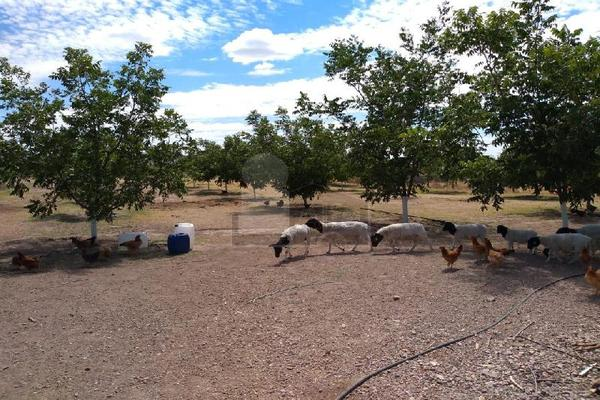 Foto de terreno comercial en venta en prof. leticia palma , ocampo o torreón, chihuahua, chihuahua, 5713273 No. 12
