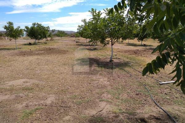 Foto de terreno comercial en venta en prof. leticia palma , ocampo o torreón, chihuahua, chihuahua, 5713273 No. 14