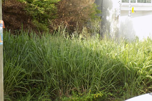 Foto de terreno habitacional en venta en prolongacion hidalgo 1711 , benito juárez norte, coatzacoalcos, veracruz de ignacio de la llave, 3502136 No. 03