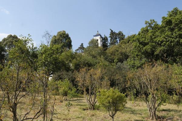 Foto de rancho en venta en prolongación morelos , san juan tehuixtitlán centro, atlautla, méxico, 19342688 No. 14