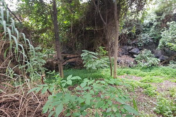 Foto de terreno habitacional en venta en  , pueblo de san pablo tepetlapa, coyoacán, df / cdmx, 8318423 No. 11
