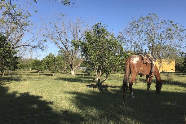 Foto de rancho en venta en  , pueblo nuevo, cadereyta jiménez, nuevo león, 5371347 No. 04