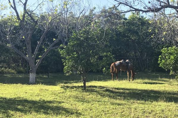 Foto de rancho en venta en  , pueblo nuevo, cadereyta jiménez, nuevo león, 5371347 No. 05