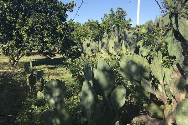 Foto de rancho en venta en  , pueblo nuevo, cadereyta jiménez, nuevo león, 5371347 No. 07