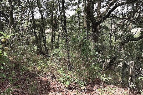 Foto de terreno habitacional en venta en pueblo san francisco magú , san francisco magu, nicolás romero, méxico, 5855362 No. 06