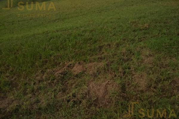 Foto de terreno habitacional en renta en  , puerto industrial de altamira, altamira, tamaulipas, 17635897 No. 05