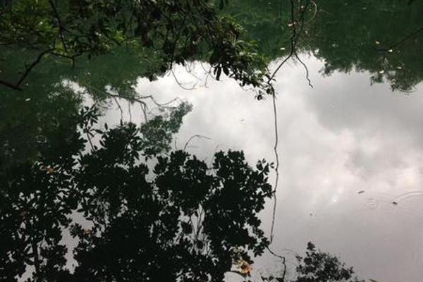 Foto de terreno habitacional en venta en  , puerto morelos, benito juárez, quintana roo, 8078206 No. 02