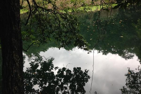 Foto de terreno habitacional en venta en  , puerto morelos, benito juárez, quintana roo, 8078206 No. 09
