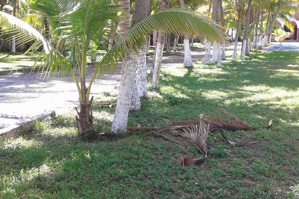 Foto de casa en venta en puerto morelos , puerto morelos, benito juárez, quintana roo, 3451667 No. 18