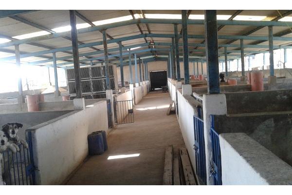 Foto de rancho en venta en  , purísima del progreso, irapuato, guanajuato, 2733129 No. 02