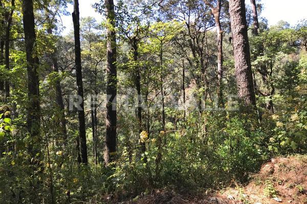 Foto de terreno habitacional en venta en rancho san simón , san simón el alto, valle de bravo, méxico, 5860244 No. 08
