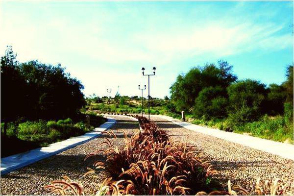 Foto de terreno habitacional en venta en  , rancho viejo, san miguel de allende, guanajuato, 10796656 No. 07