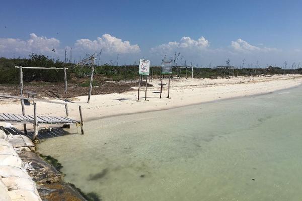 Foto de terreno comercial en venta en  , rio lagartos, río lagartos, yucatán, 3036219 No. 04