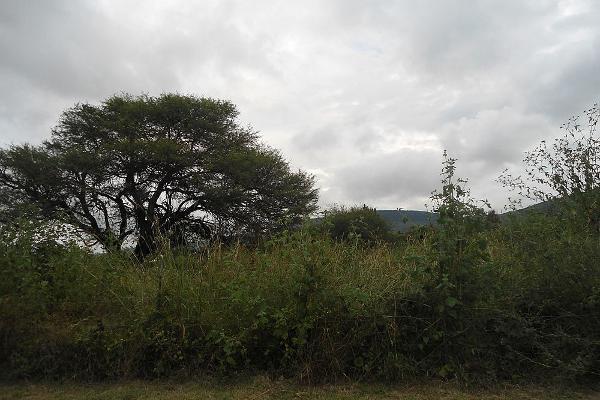 Foto de terreno habitacional en venta en roca azul , jocotepec centro, jocotepec, jalisco, 5694360 No. 09