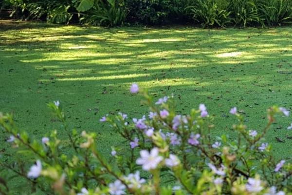 Foto de terreno habitacional en venta en ruta del bosque , avándaro, valle de bravo, méxico, 12268157 No. 03
