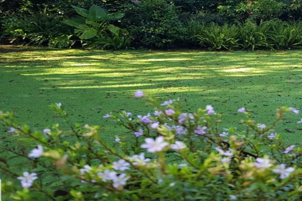 Foto de terreno habitacional en venta en ruta del bosque , avándaro, valle de bravo, méxico, 12276178 No. 03