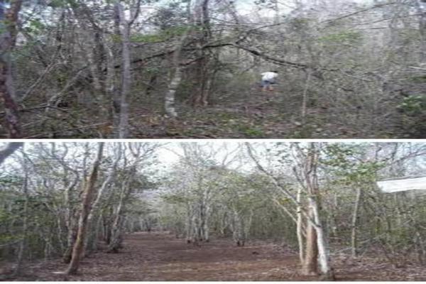 Foto de terreno habitacional en venta en  , saban, josé maría morelos, quintana roo, 10482223 No. 05