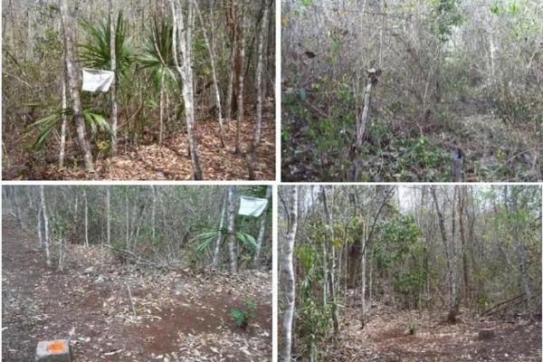 Foto de terreno habitacional en venta en  , saban, josé maría morelos, quintana roo, 10482223 No. 06