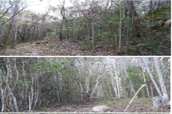 Foto de terreno habitacional en venta en  , saban, josé maría morelos, quintana roo, 10482223 No. 07