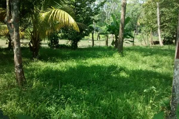 Foto de terreno habitacional en venta en  , saloya 2 sección, nacajuca, tabasco, 2732303 No. 02