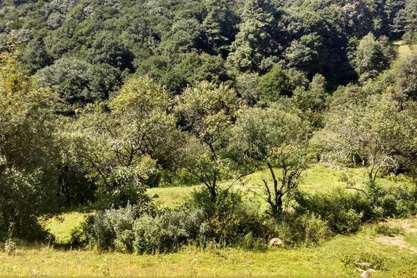 Foto de terreno habitacional en venta en san antonio s/n , san antonio el paso, omitlán de juárez, hidalgo, 15226328 No. 02
