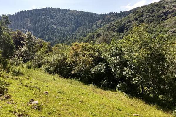 Foto de terreno habitacional en venta en san antonio s/n , san antonio el paso, omitlán de juárez, hidalgo, 15226328 No. 03
