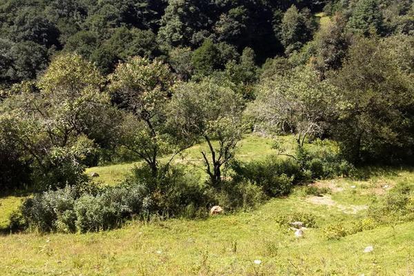 Foto de terreno habitacional en venta en san antonio s/n , san antonio el paso, omitlán de juárez, hidalgo, 15226328 No. 05