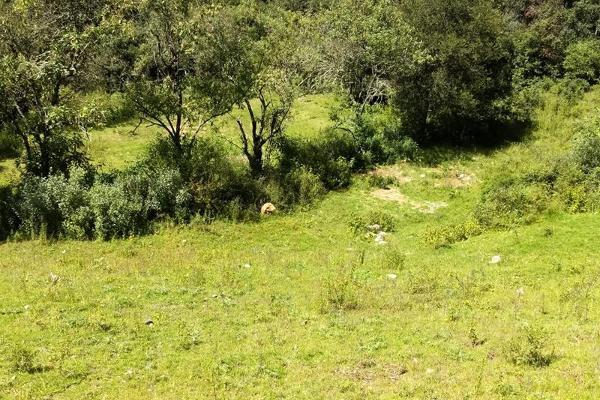 Foto de terreno habitacional en venta en san antonio s/n , san antonio el paso, omitlán de juárez, hidalgo, 15226328 No. 08