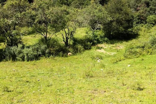 Foto de terreno habitacional en venta en san antonio s/n , san antonio el paso, omitlán de juárez, hidalgo, 15226328 No. 09