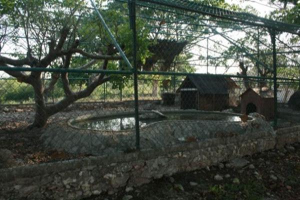 Foto de rancho en venta en  , san antonio tehuitz, kanasín, yucatán, 14028223 No. 18