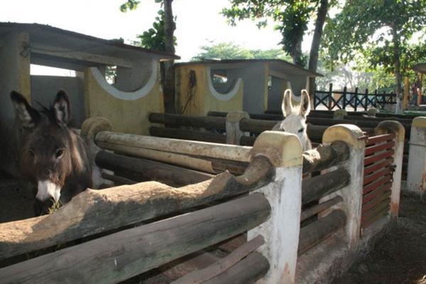 Foto de rancho en venta en  , san antonio tehuitz, kanasín, yucatán, 14028223 No. 25
