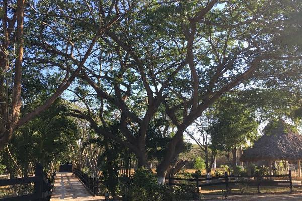 Foto de casa en venta en  , san antonio tehuitz, kanas?n, yucat?n, 3157433 No. 32