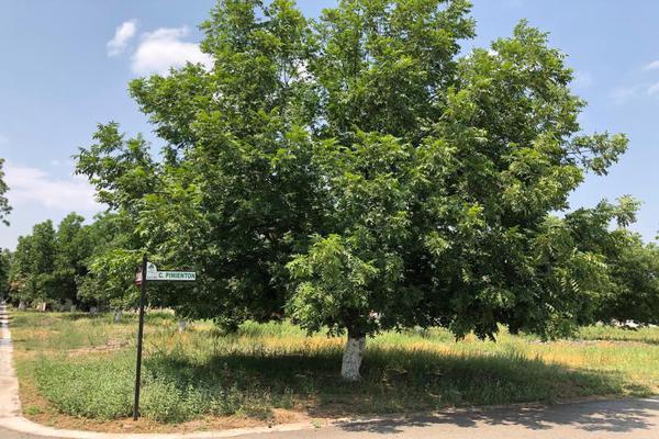 Foto de terreno habitacional en venta en  , san armando, torreón, coahuila de zaragoza, 7267186 No. 02