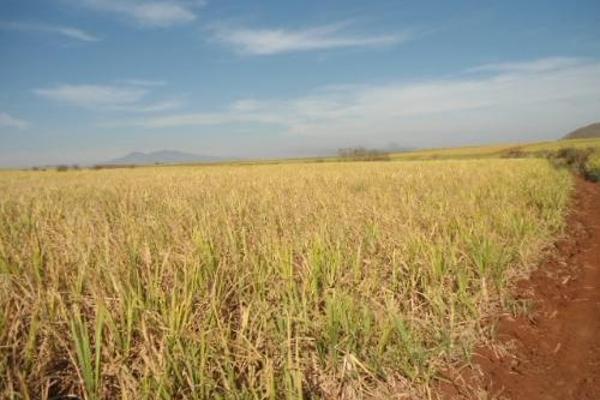 Foto de terreno habitacional en venta en  , san fernando, tepic, nayarit, 2689351 No. 03