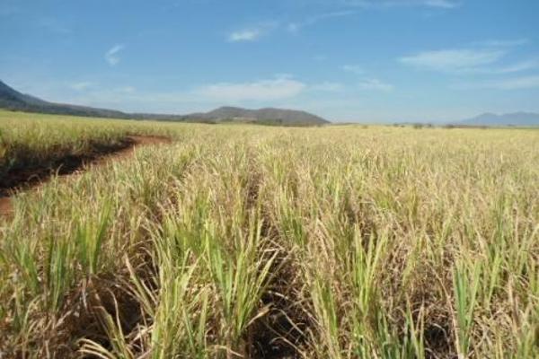 Foto de terreno habitacional en venta en  , san fernando, tepic, nayarit, 2689351 No. 04