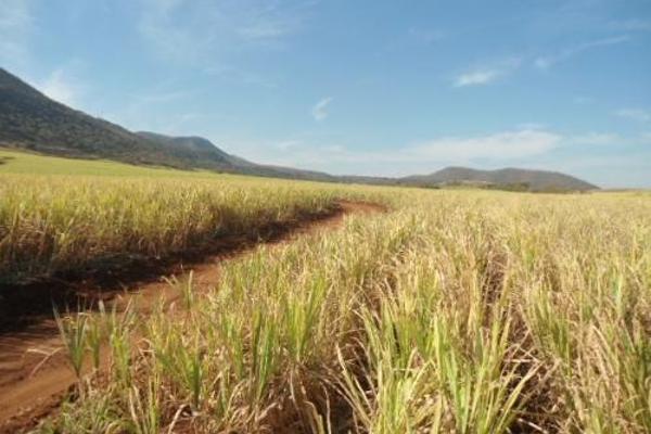Foto de terreno habitacional en venta en  , san fernando, tepic, nayarit, 2689351 No. 05