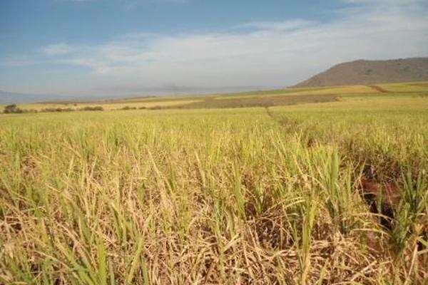 Foto de terreno habitacional en venta en  , san fernando, tepic, nayarit, 2689351 No. 07