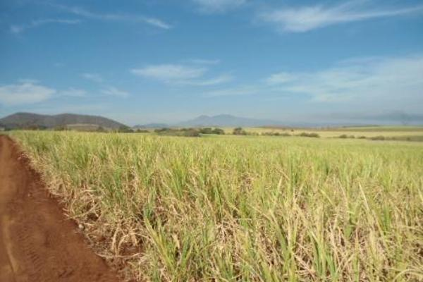 Foto de terreno habitacional en venta en  , san fernando, tepic, nayarit, 2689351 No. 08