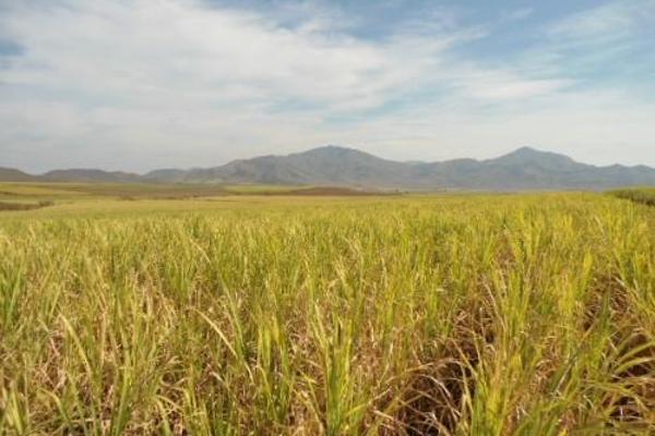 Foto de terreno habitacional en venta en  , san fernando, tepic, nayarit, 2689351 No. 10