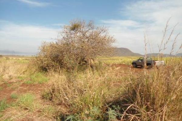 Foto de terreno habitacional en venta en  , san fernando, tepic, nayarit, 2689351 No. 11